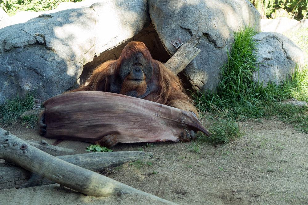 San Diego Zoo09.jpg