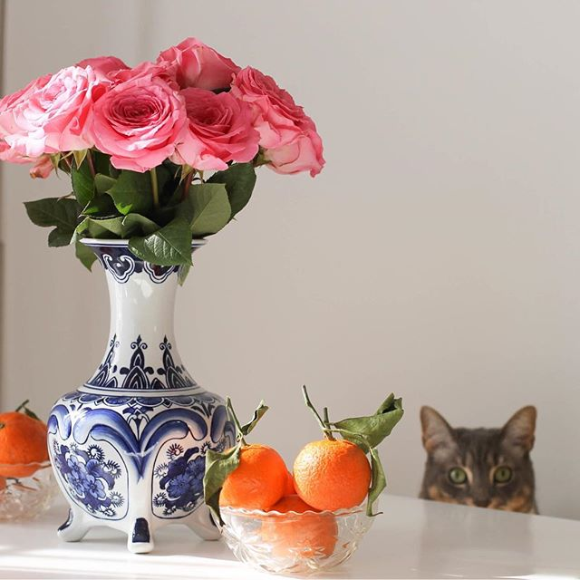 Happy #NationalPetDay! 🌸🐱🍊 #MyMidwestIsShowing