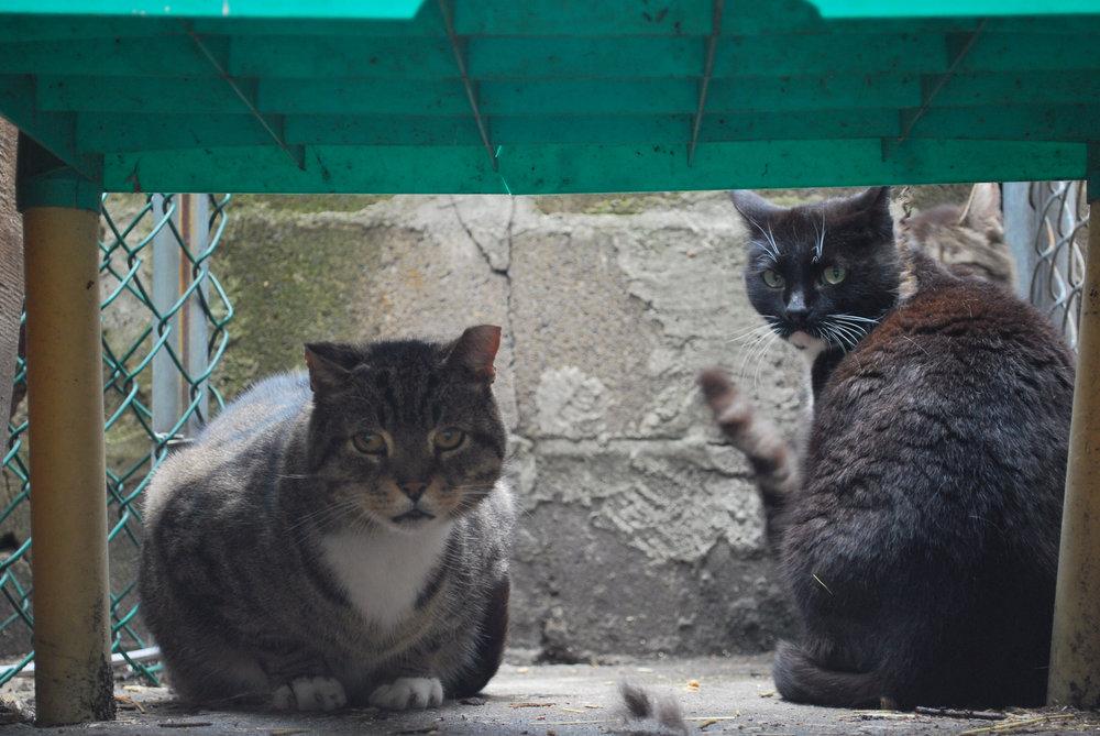 Kitty7.jpg