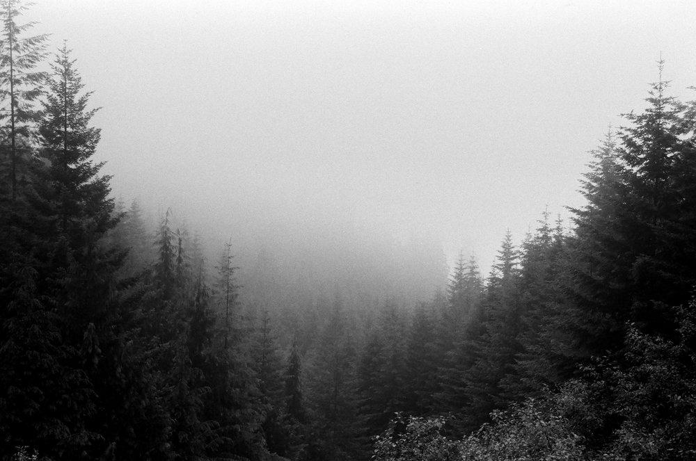 The fog-filled forests alongside West Coast Rd.