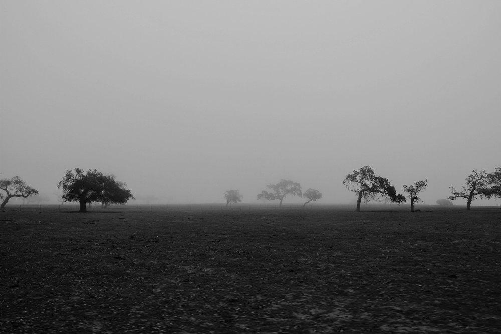 trees-1030814_1920.jpg