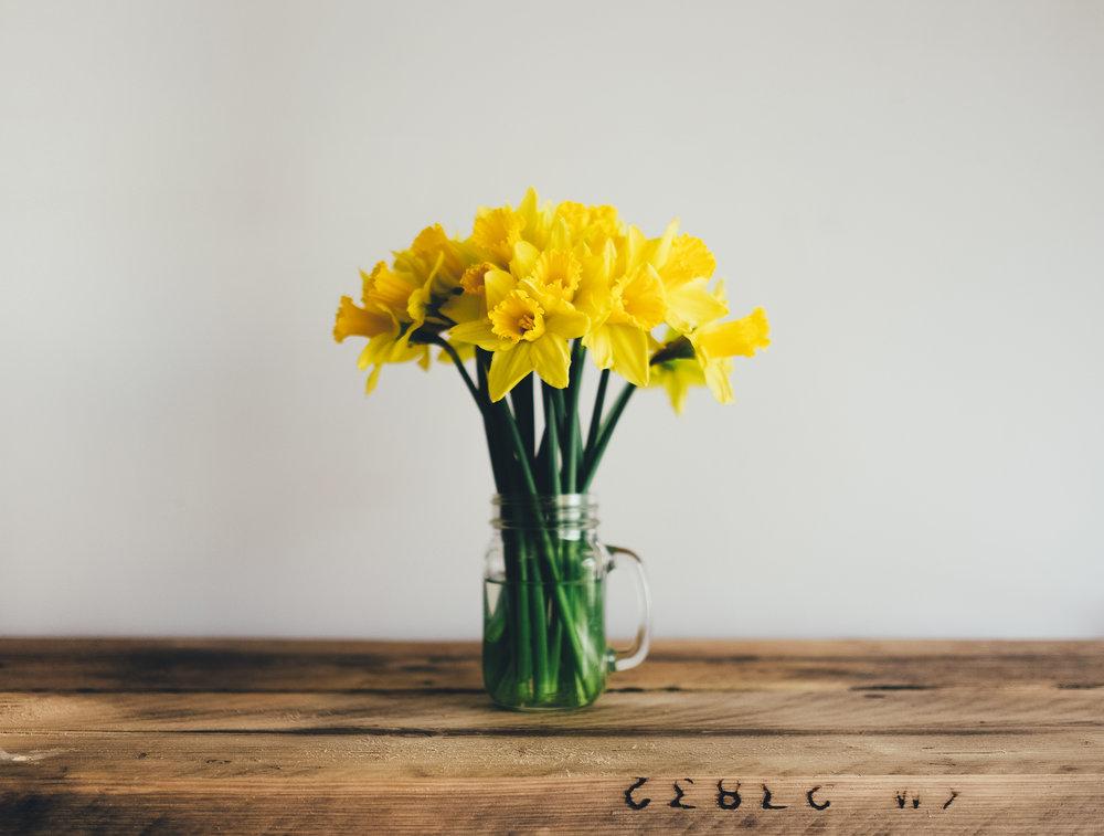 Classic Daffodils