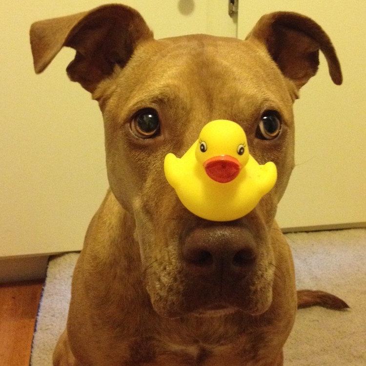 IMG_tonto_balance_duck.JPG