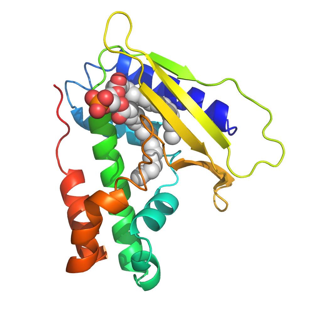 Lipid Binding Proteins