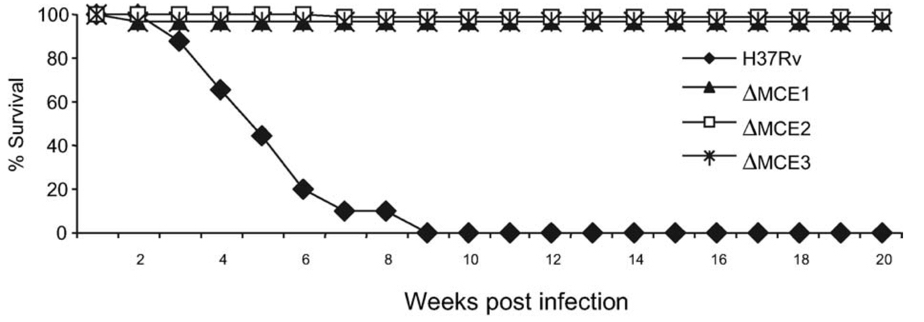 Adapted from Gioffré et al. Microbes and Infection. 2007. 7:325–334.  While wild-type TB kills infected mice over the course of many weeks, MCE mutants survive.