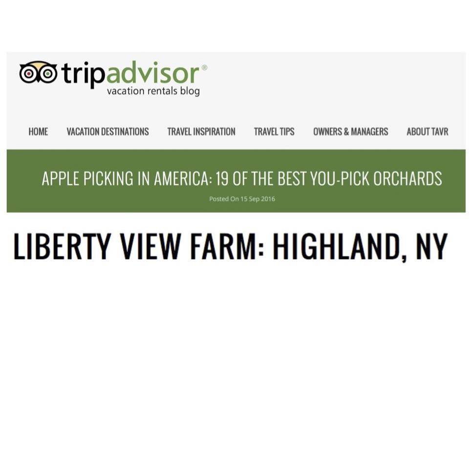 tripadvisor lvf sq jpeg 2.jpg