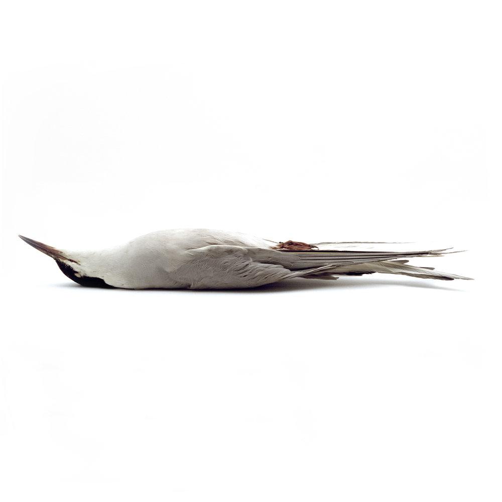 12bird.jpg