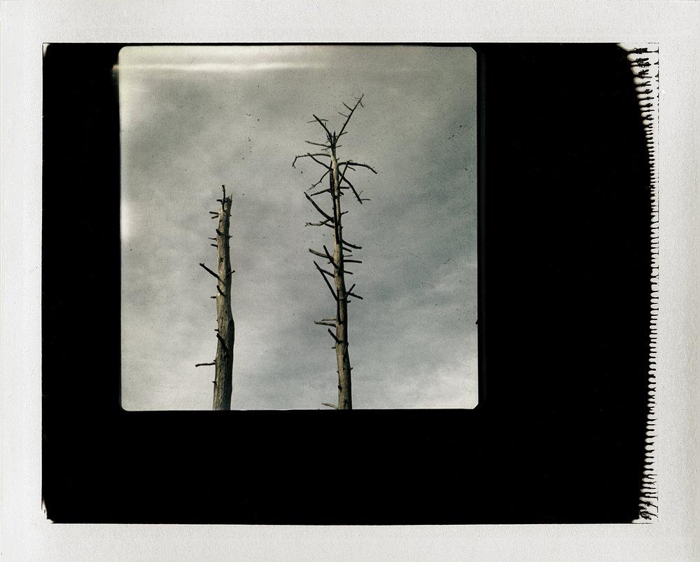 Polaroid 2 Full Scan Edit 2.jpg