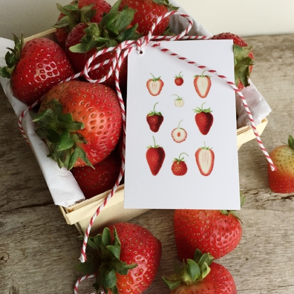 Mini Gifting Cards in Strawberry Slices from White and Fig