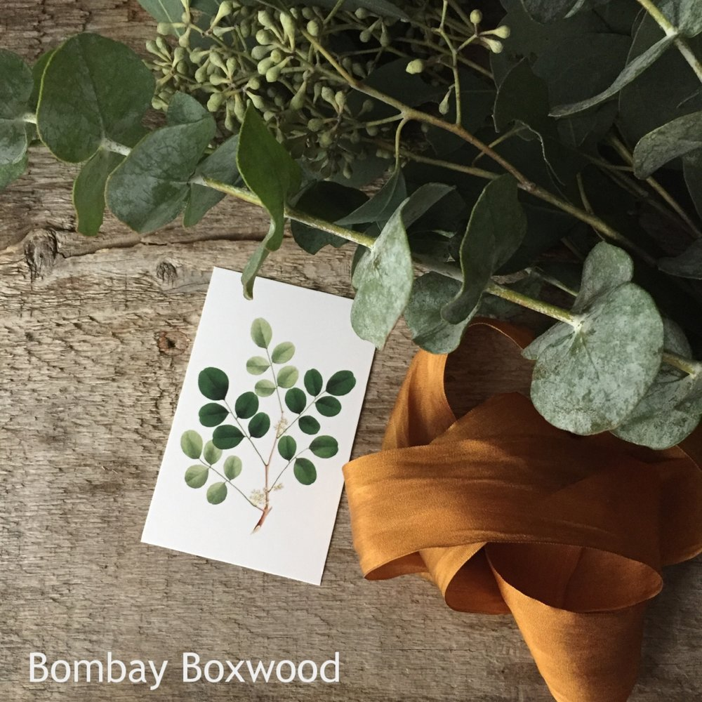 Mini Gifting Cards from White and Fig