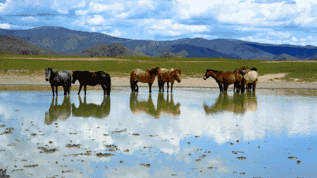 Photos of horses to promote Apache horse sanctuary program