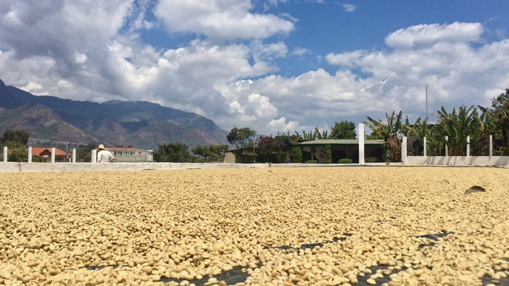 Coffee beans for days. -Rachel Carr