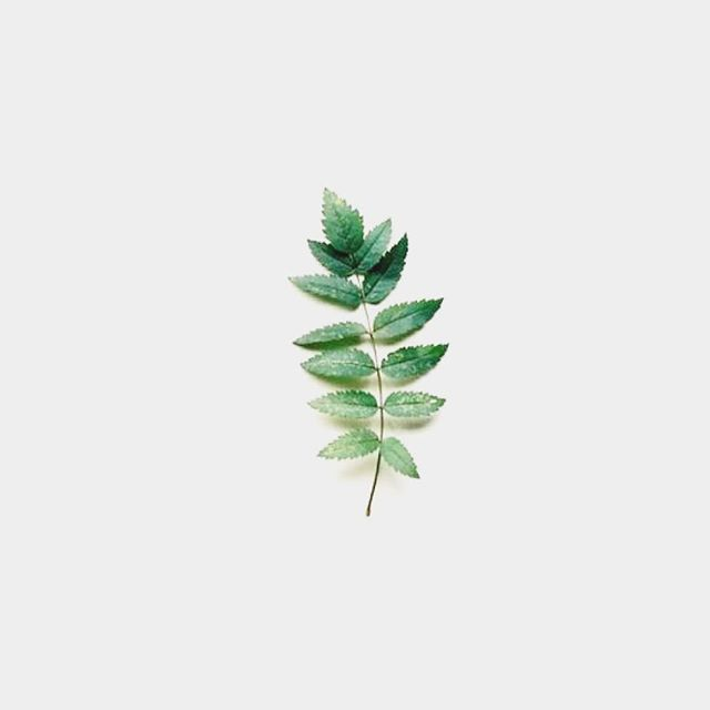 Today's colour palette. Simple & natural just like today's sunny yet cozy Sunday🌿 . . . .  #colourpalette #design #graphicdesign #watercolour #inspiration #natural #nature