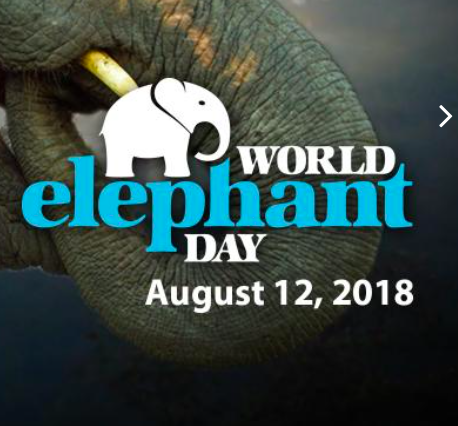 LM - Image - Event Days - World Elephant Day.png