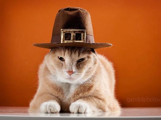 thanksgiving_pilgrim_cats_02.jpg