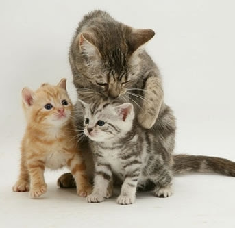 cats and kittens playing1.jpg