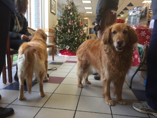 Maddie was a greeter with purpose at Complete Pet Care on December 4th.