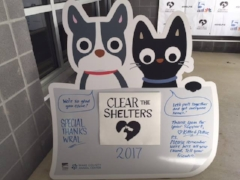 Clear the Shelter -- Wake County Animal Center