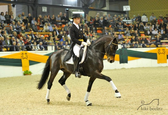 Herzensdieb, owned by Leatherdale Farms and ridden by Steffen Frahm, was honored as an Elite Stallion by the Trakehner Verband in Germany. Photo by Kiki Beerlitz.