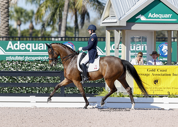 Diane Creech and Diana C in the mare's first CDI competition. Photo by Susan Stickle.