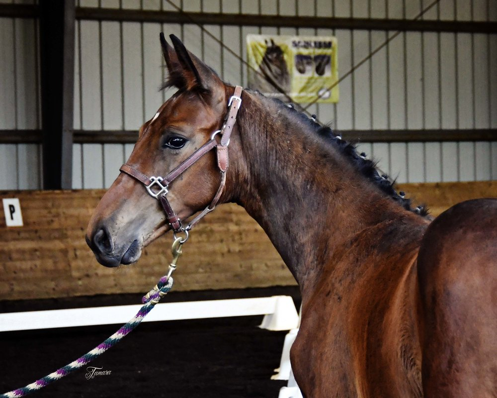 Finnigan (First Dance-Landory, Landor S.)