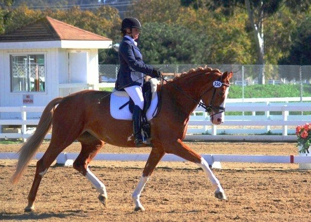 Carette MG (His Highness-Torette MG, Olympic Silvano)