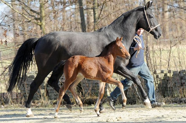 Filly (Damsey FRH, Wunsch Dir Was, Worldly)