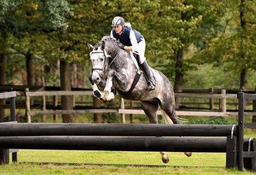 Leatherdale-grey-horse-.jpg