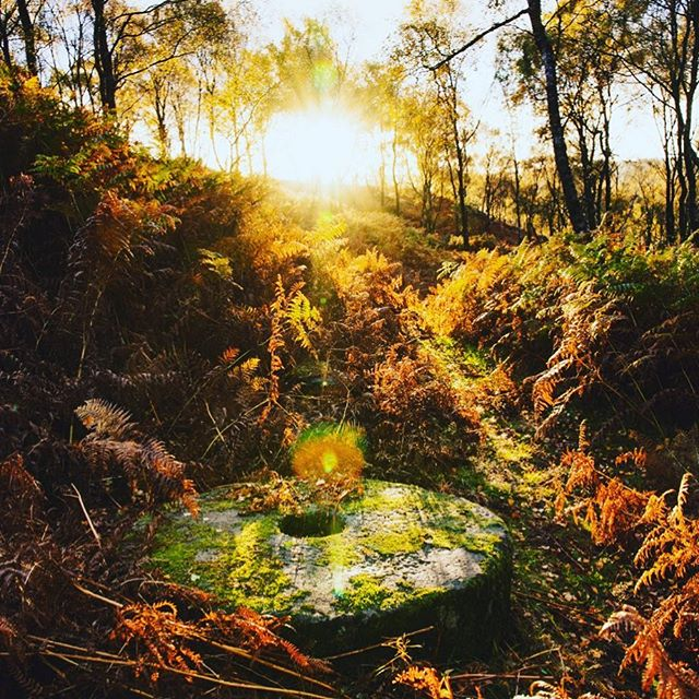 What a fabulous photo by @sam_wlkr.  The millstone is so much a part of the Peak District's cultural heritage that it has become their logo. Look out for the upright millstone on the side of the road as you enter the Peak District National Park. Also look out for the many discarded millstone, like this one on Curbar Edge at Calver, left lying in the area they were quarried and shaped. It's fun counting up how many you can find! @inspiredbythepeakdistrict #peakdistrict #curbaredge #millstones #autumnsunlight #protectiveskincare #organicskincare #soilassociation