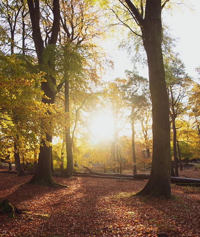Sometimes self-care is simply taking a walk in your local park or woods! #inspiredbypeakdistrict #autumndays #autumnleaves #outdoorlife