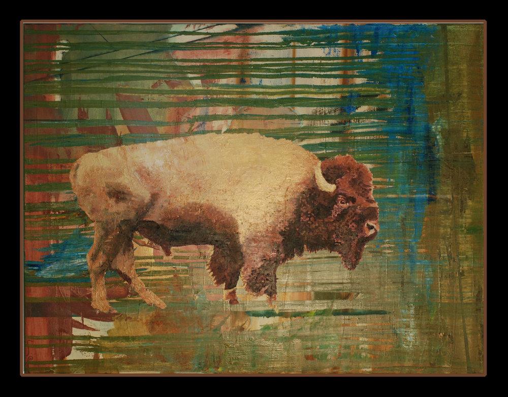 Buffalo, 30x40 oil on canvas, 2015