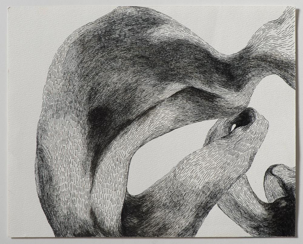 Animal, 2014