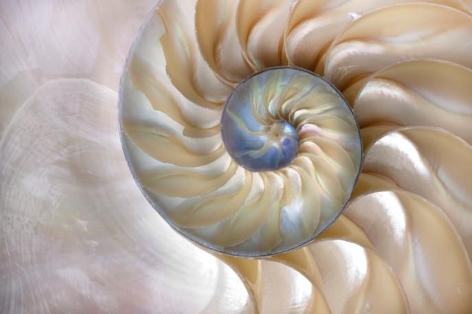 shellbeach.jpg