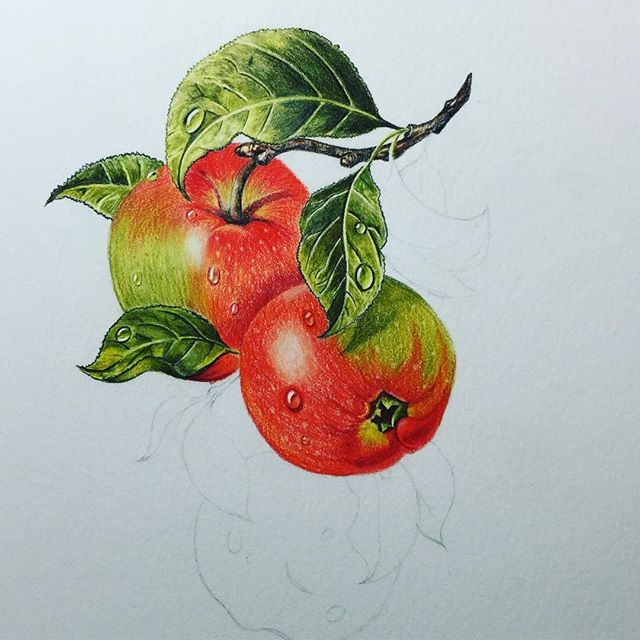 Last WIP before I finish the drawing, it's a weird process, or feeling, as I'm working nothing looks right and it doesn't feel like it is coming together, but once I stop and take a step back it looks better. Still a long way to go but this is it so far. @caran_dache Pablo #coloredpencils on @strathmoreart 400 Series Bristol. Ordinarily I would have used my favourite paper @strathmoreart 500 Series Bristol Plate but I didn't want to waste the paper thinking that the image wouldn't turn out well, but I'm happy with it so far and wish I had of used the 500 now.