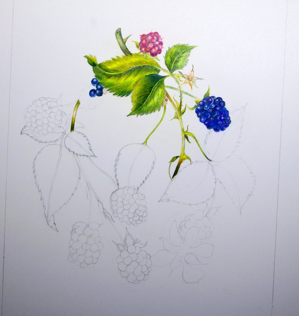 Fourth ProColour Botanical Image.jpg
