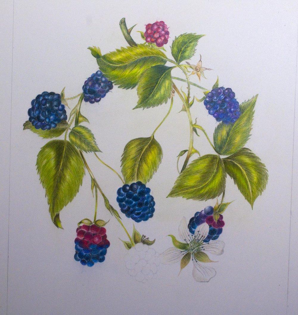 Ninth ProColour Botanical Image.jpg