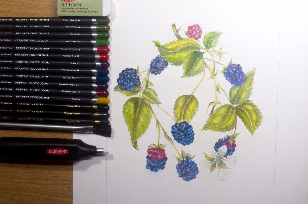 Eleventh ProColour Botanical Image .jpg