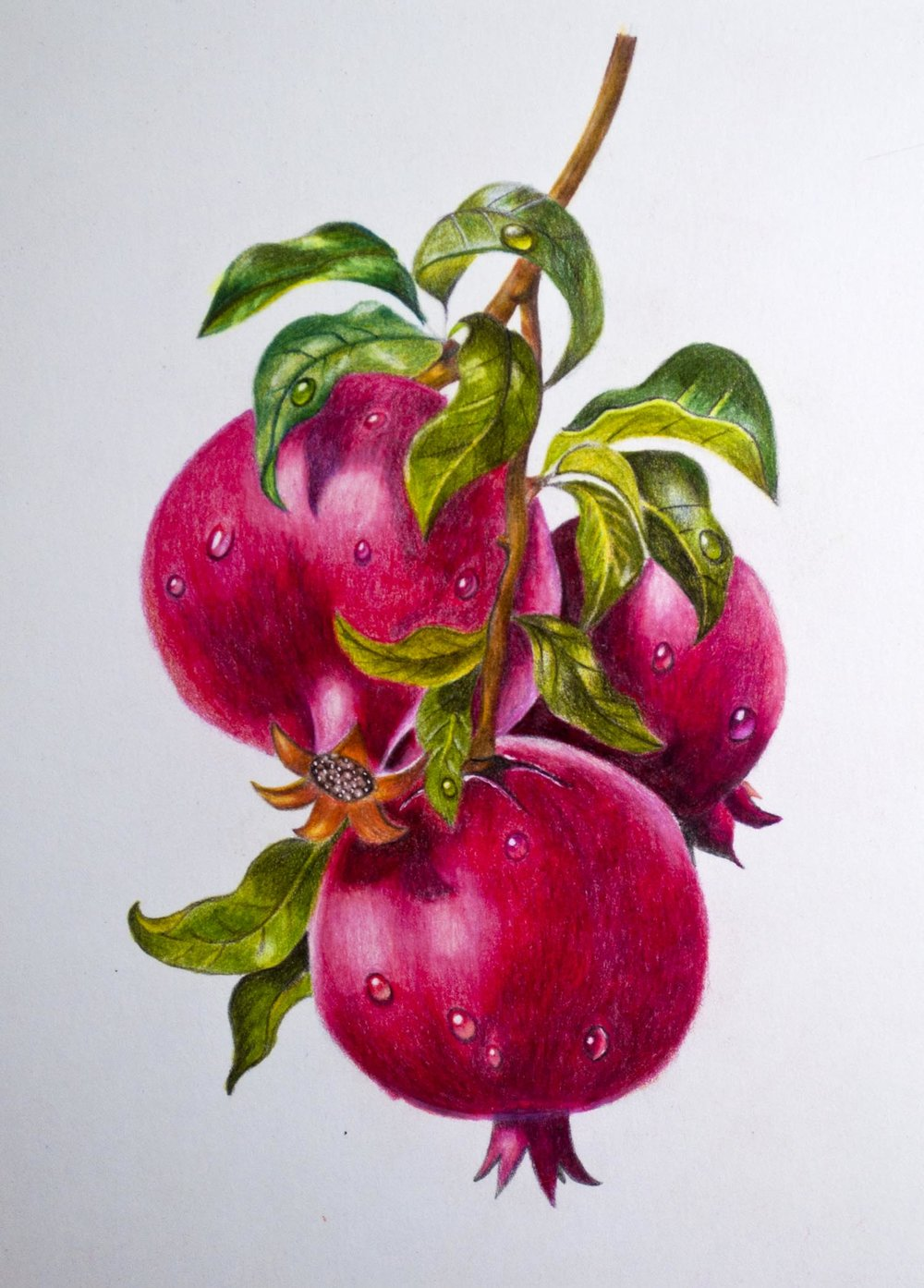 Arteza colored pencil speed drawing of pomegranates the art gear guide