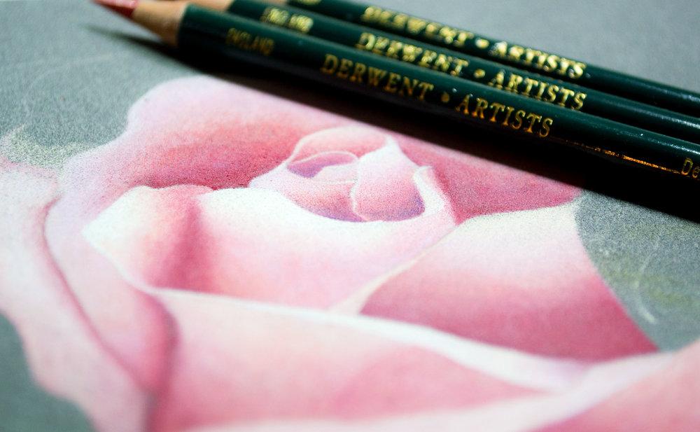 Derwent Artist Rose Image 3 Design.jpg