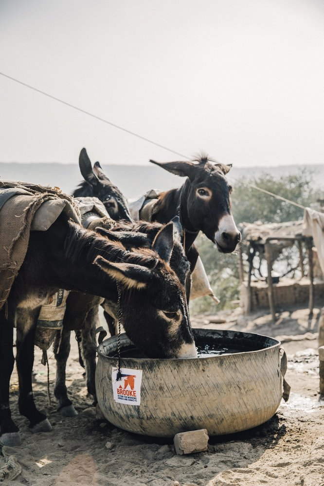 Hydration. Stimulation. Relaxation. Interaction. Daylight. Equals - happier donkeys. © Freya Dowson – Brooke