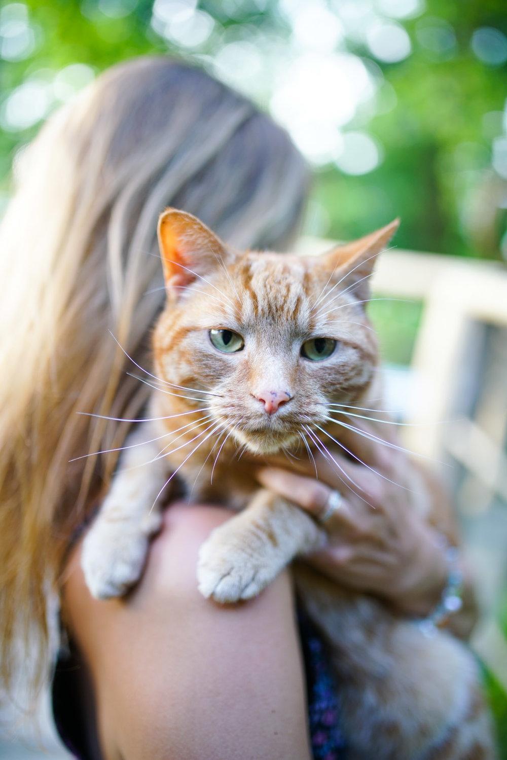 Jimmy, the world's friendliest cat.