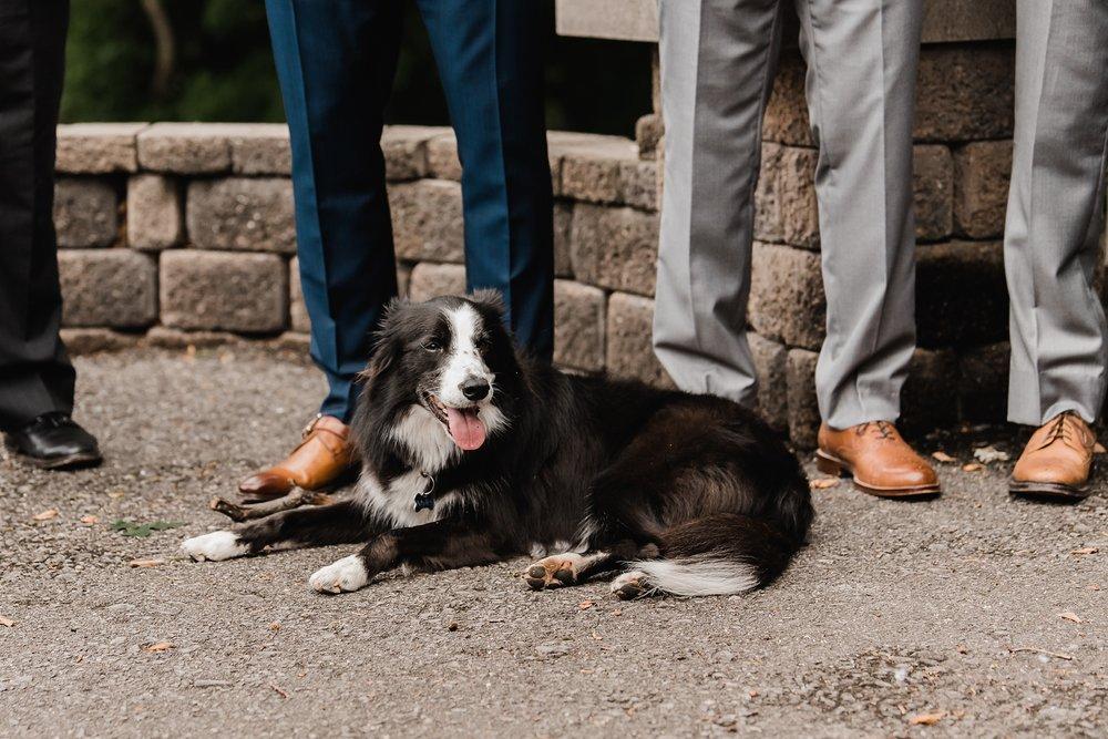 photo of dog at wedding ceremony