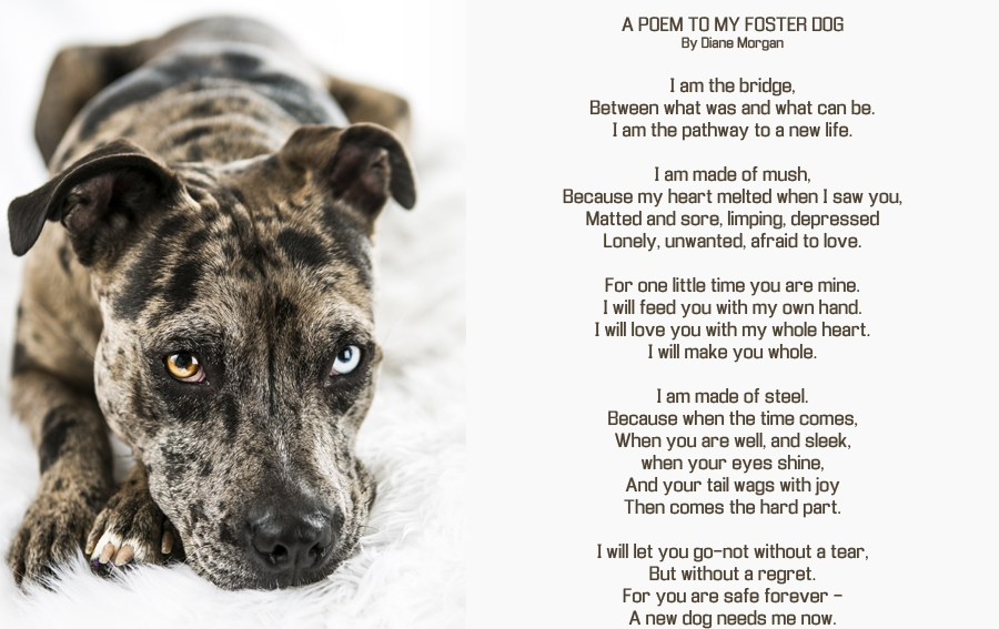 Poem-to-foster-dog.jpg