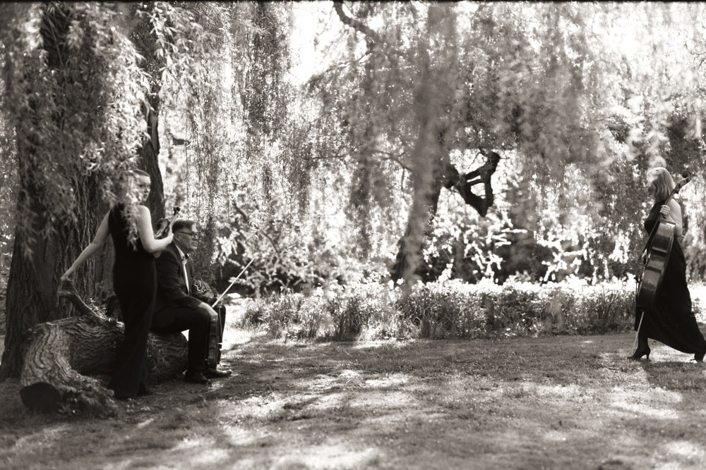 Dahlia String Trio by caroline bittencourt 007.jpg