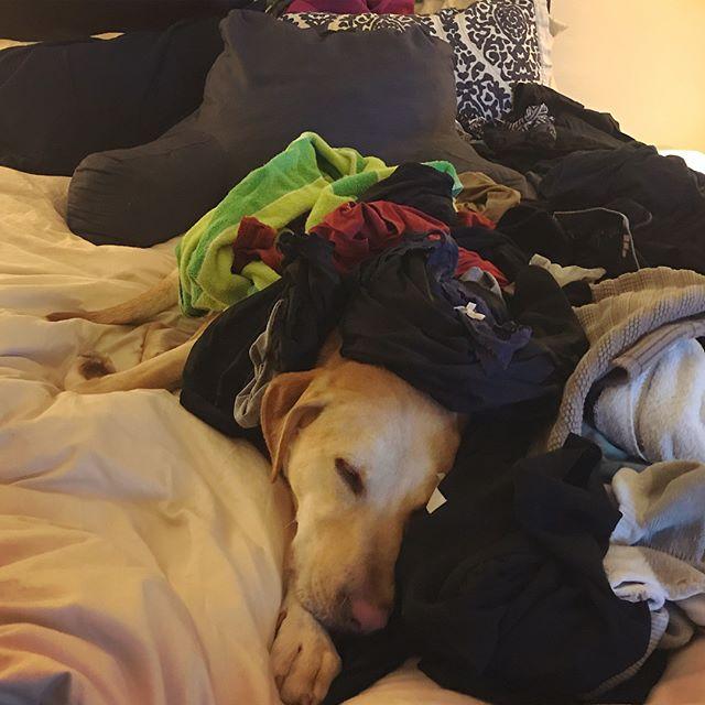 The laundry monster strikes again! #primepetboxmascot
