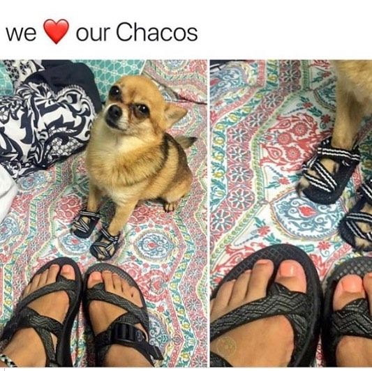 Get your Chacos out. It's officially summer time! ☀️🐶