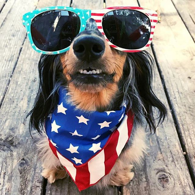 Happy 4th of July to all our furry friends! 🇺🇸🐶🐱