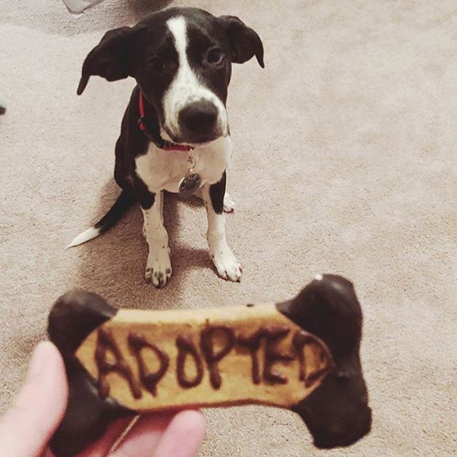These good boys & girls deserve a Prime Pet Box for their birthday! 🐶📦🎂