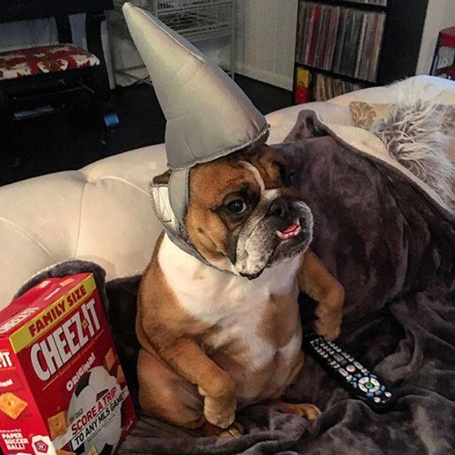 Who's ready? #sharkweek