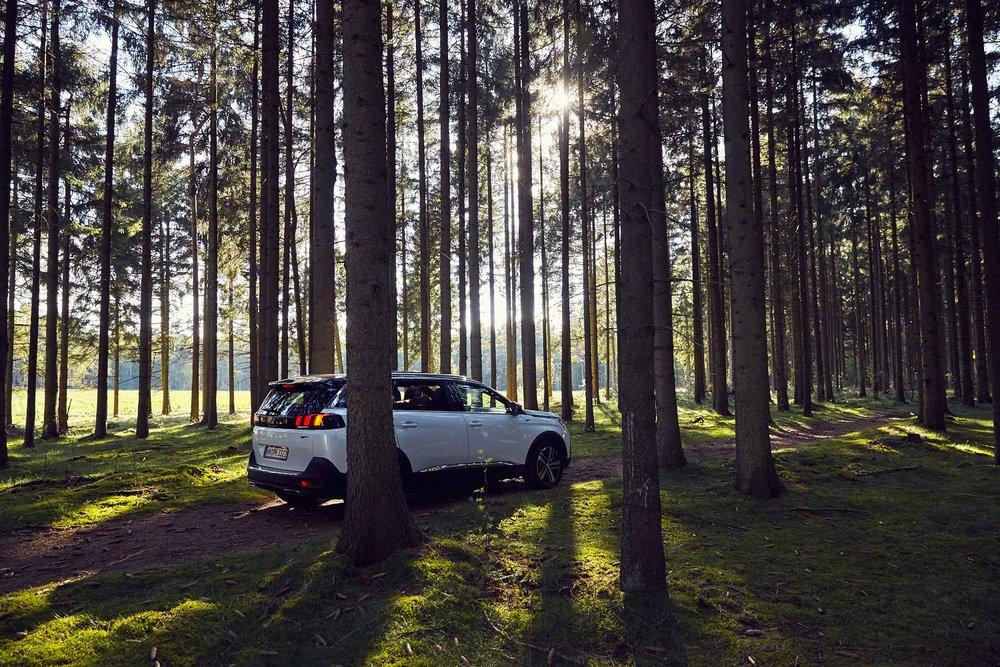Peugeot_Dogs_MG_4790-1.jpg